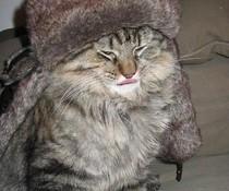 Betrunkene Katze