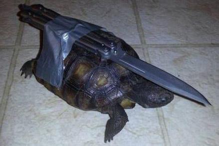 Einer Schildkröte wurde ein Butterflymesser auf den Panzer geklebt. Sie sieht aus wie eine Kampf-Schildkröte.
