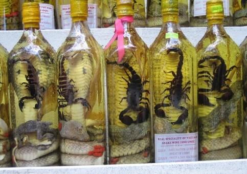 In Schnapsflaschen sind Skorpione und Schlangen eingelegt.