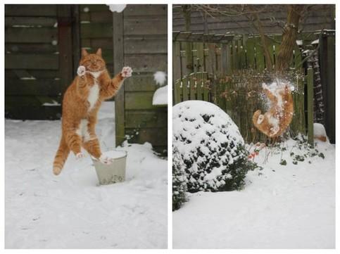 Eine Katze springt nach einem Schneeball. Dieser Schneeball trifft sie mit voller Wucht in der Luft.