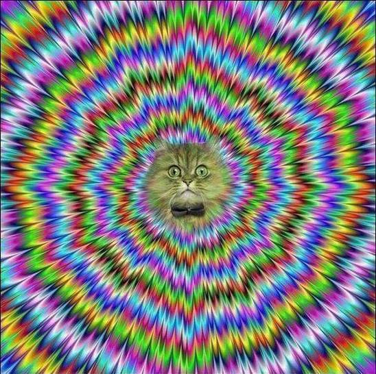Ein Bild, das beim Anschauen zuckt. Und aus der Mitte schaut eine Katze heraus.