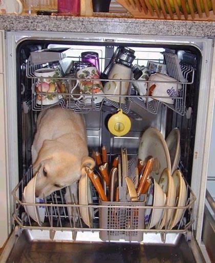 Ein Hund leckt das Geschirr in einer Geschirrspülmaschine sauber.