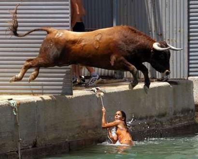 Ein Stier springt ins Wasser.