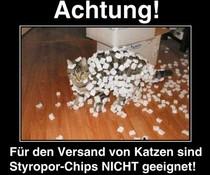 Katzen-Versand