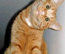 Rechter-Winkel-Katze