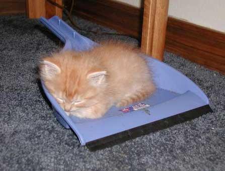 Ein Kätzchen schläft auf einem Kehrblech.