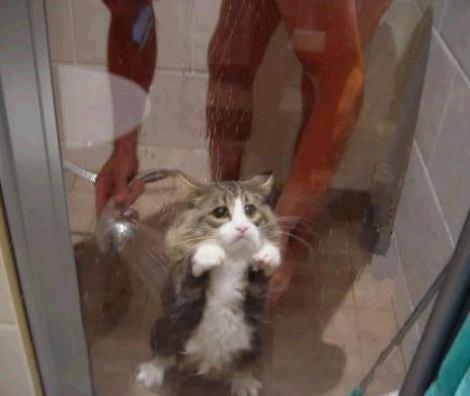 Eine Katze wird geduscht und macht dabei ein sehr trauriges Gesicht.