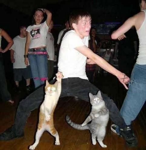 Ein Junge tanzt mit Katzen.