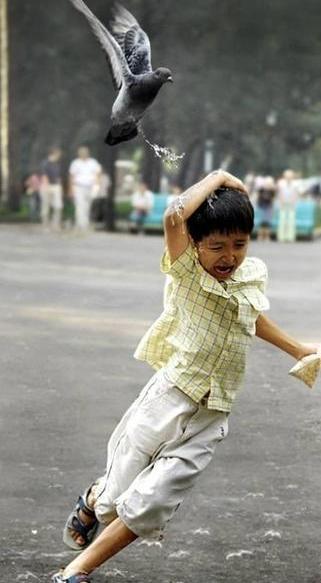 Eine Taube kackt auf einen fliehenden Jungen.