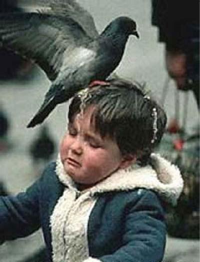 Eine Taube hat einem Kind auf den Kopf gekackt.