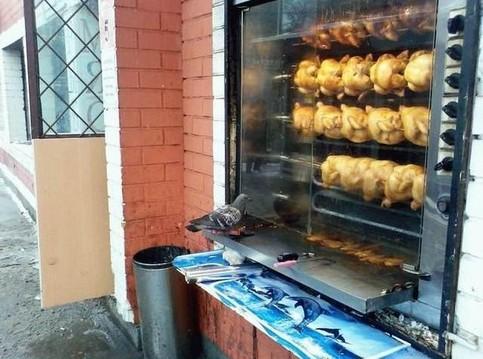 Eine Taube betrachtet einen Grill mit lauter knsuprigen Hähnchen.