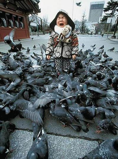 Ein Kind ist von Tauben umgeben und heult.