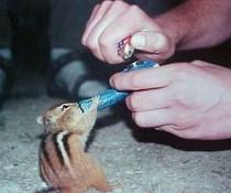 Kleiner Raucher