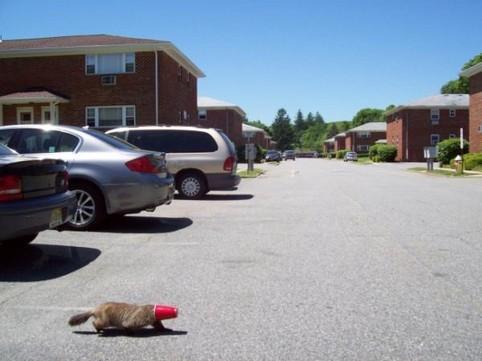 Ein Tier hat einen roten Trinkbecher über den Kopf gestülpt und läuft durch die Gegend.