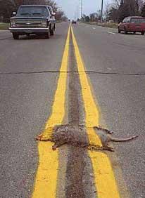 Ein Tier ist auf einer Straße überfahren und übermalt worden.