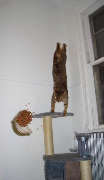 Eine Katze turnt auf einem Kratzbaum, während eine Schale mit Futter durch die Luft fliegt.