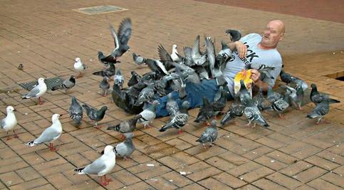 Ein am Boden liegender Mann wird von Tauben überfallen.