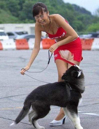 Ein Hund zerreisst das Kleid einer Frau.