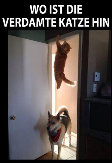 Ein Hund schaut durch eine Tür und sucht eine Katze. Diese hängt oben am Türrahmen.