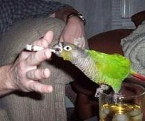 Raucher-Vogel