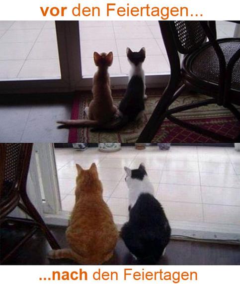 Zwei Fotos von zwei Katzen. Auf dem einen Bild sind zwei dünne Katzen zu sehen (vor den Feiertagen), auf dem anderen zwei dicke Katzen (nach den Feiertagen).