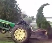 Baum peitscht Traktor