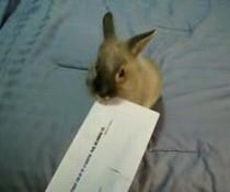Tierischer Brieföffner