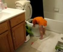 Toilettentaucher
