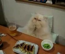 Katze frühstückt