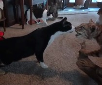 Schreckhafte Katze
