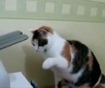 Katzen-Drucker-Kampf