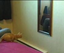 Katze und Spiegel