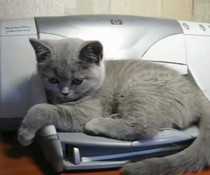 Katze gegen Drucker