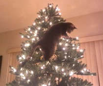 Katze zerstört das Fest