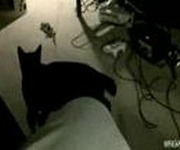 Katzen-Akrobat