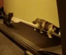 Lustige Laufkatzen