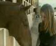 Schock-Pferd