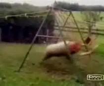 Schaf vs. Schaukel