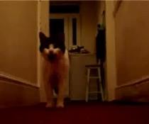 Sprechende Katze