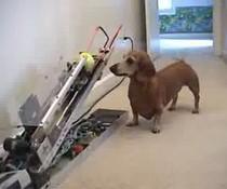 Hunde-Unterhaltung
