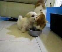 Welpe vs. Katze